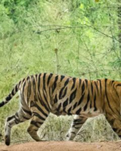 Beautiful kanha Tiger Reserve