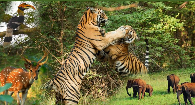 india wildlife life global path holidays